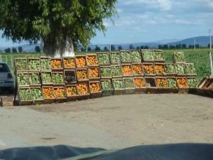Oranges and artichokesa