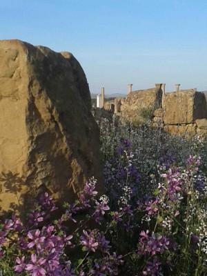 Timgad springtime